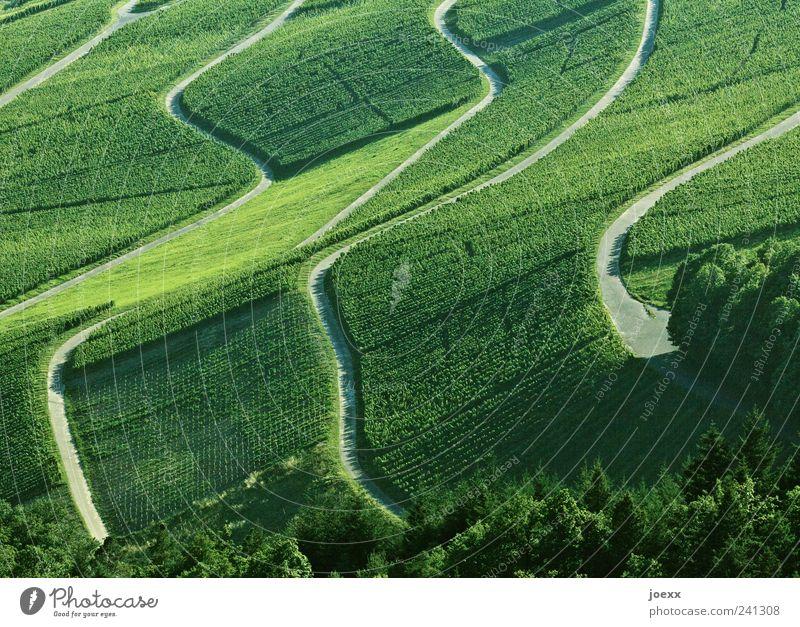 Umwege grün Sommer ruhig Berge u. Gebirge grau Wege & Pfade Landschaft Wein Schönes Wetter Weinberg Nutzpflanze Weinbau