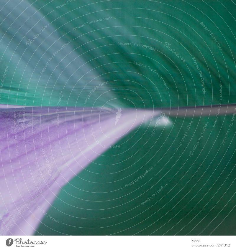 Spiegelbild Pflanze Wasser Frühling Blatt Blüte Linie Streifen Blühend ästhetisch außergewöhnlich eckig einfach Flüssigkeit schön Spitze blau grün violett