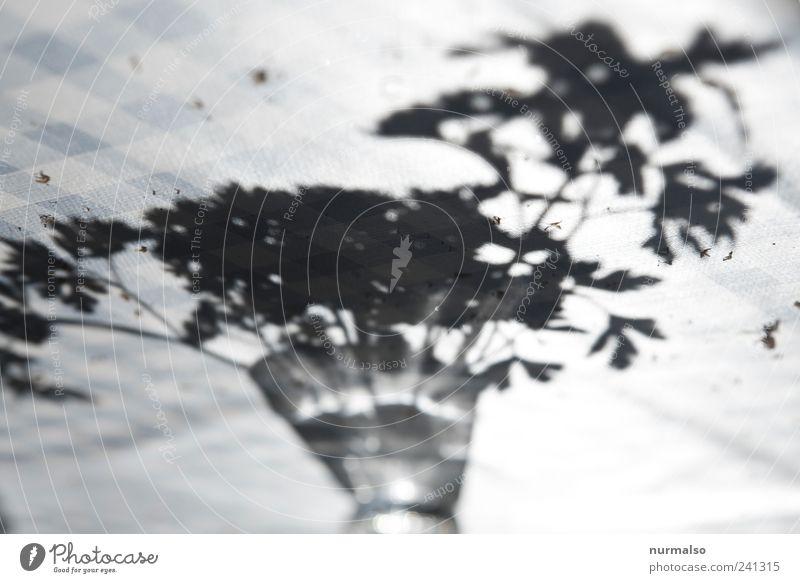 black Petersilie Kräuter & Gewürze Bioprodukte Lifestyle Häusliches Leben Natur Sommer Wachsdecke Gartentisch genießen lecker Leichtigkeit Wasserglas kariert