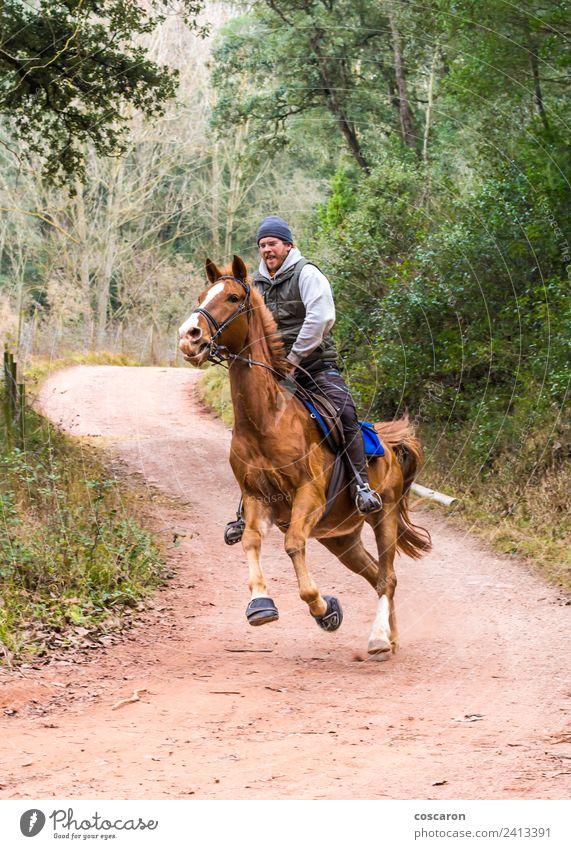 Junger Mann galoppierend auf braunem Pferd Freiheit Sport Frau Erwachsene Natur Landschaft Herbst Leder blond Geschwindigkeit wild Zaumzeug Galopp heimisch