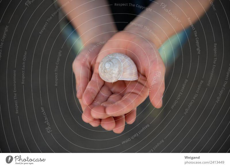 Schneckenglück II harmonisch Wohlgefühl Zufriedenheit Sinnesorgane Erholung ruhig Meditation Kindergarten Schulkind Kleinkind Junge Hand Menschlichkeit