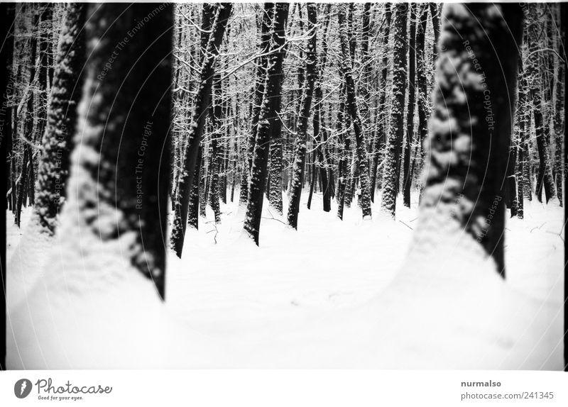 Winterkontrast Natur Einsamkeit Landschaft Wald dunkel kalt Schnee Stimmung Eis Kraft glänzend Klima beobachten Wandel & Veränderung Frost
