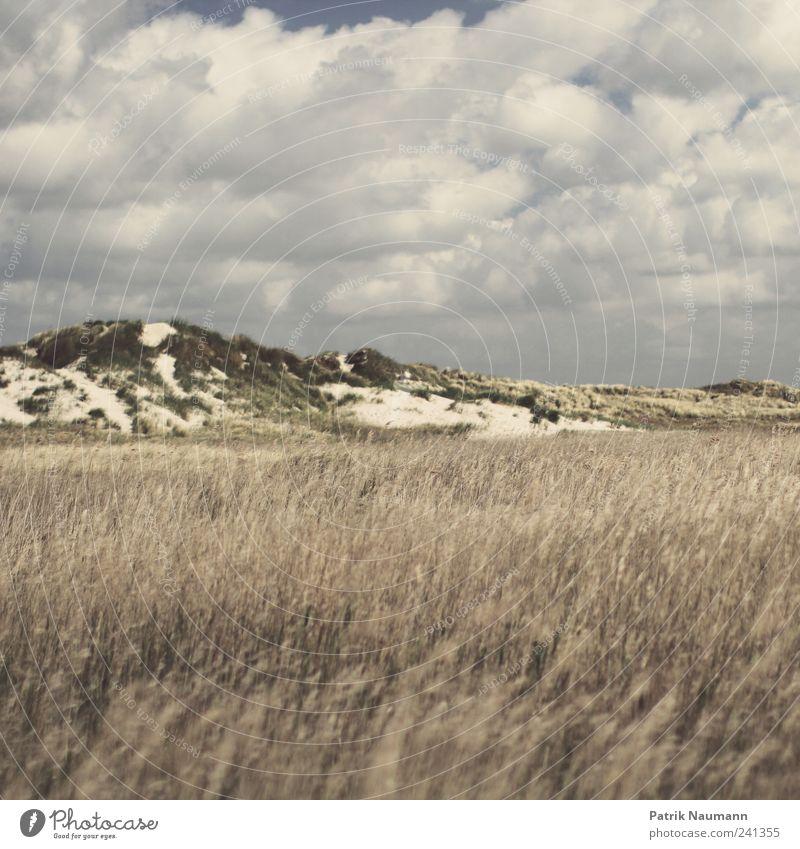 Nordische Harmonie Himmel Natur weiß Pflanze Sommer Strand Wolken ruhig Erholung Landschaft dunkel kalt Herbst Gras Küste Wetter