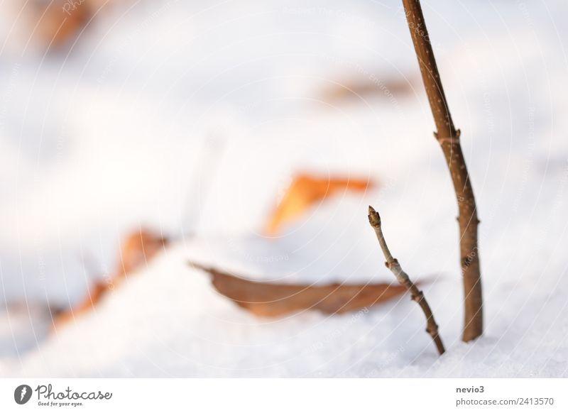 Winterlandschaft - Knospe im Schnee Umwelt Natur Landschaft Erde Pflanze Blatt Nutzpflanze Garten Park Wald hell schön weiß Blütenknospen Blattknospe Wachstum