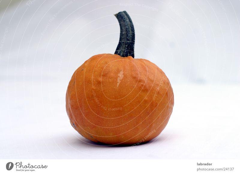 Kürbis Ernährung orange frei rund Halloween