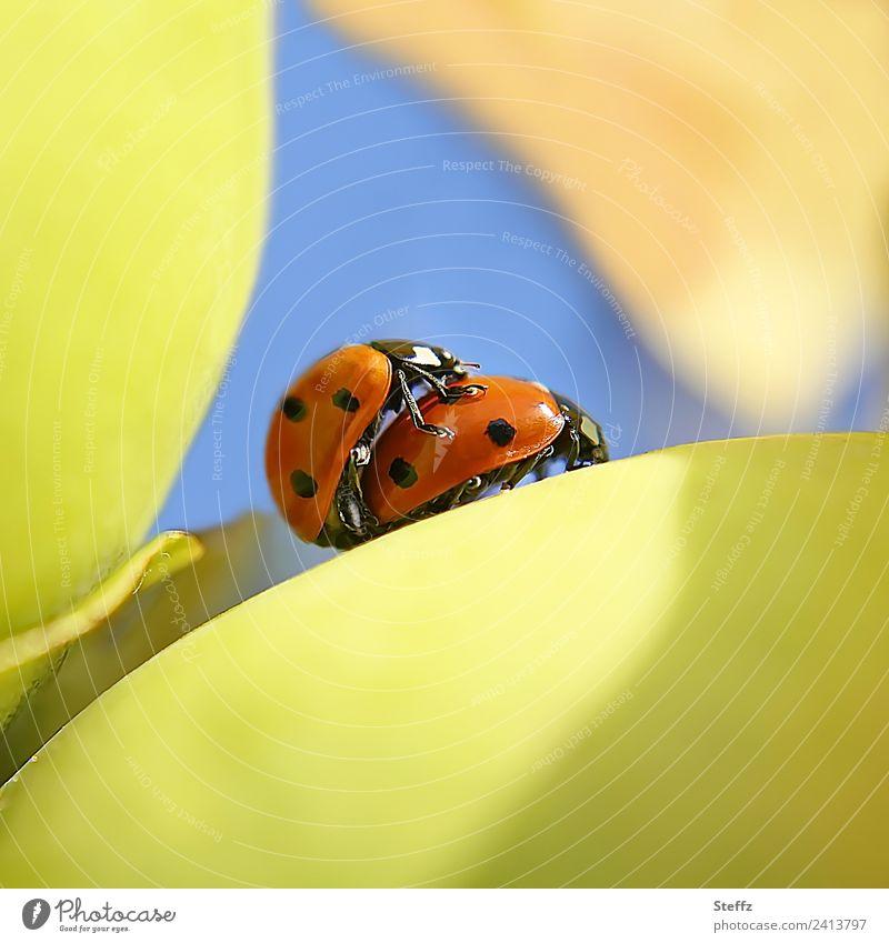 Glücksbringer privat Natur blau Pflanze rot Tier gelb Umwelt Herbst klein Tierpaar Lebensfreude Schönes Wetter Romantik Insekt Käfer