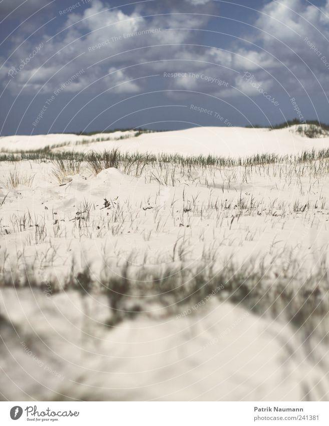 Sand im Sucher Landschaft Wolken Gras Strand Nordsee St. Peter-Ording entdecken Erholung Ferne frei Unendlichkeit weich blau gold grün ästhetisch Zufriedenheit