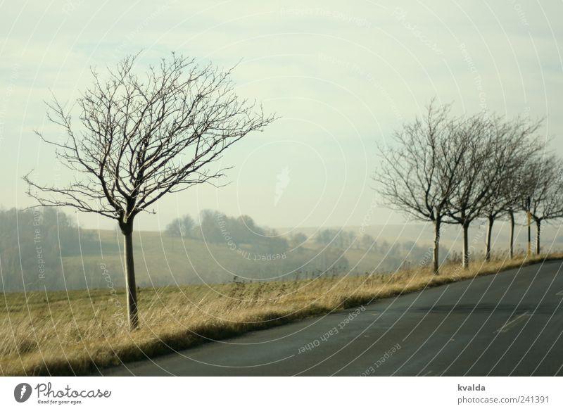 Lücke Himmel Natur Baum Pflanze Einsamkeit ruhig Erholung Ferne Landschaft Straße Wiese Herbst grau Idylle Hügel Sehnsucht