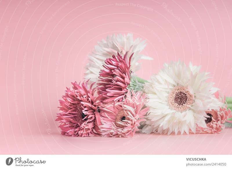 Pastell rosa Blumen Natur Sommer Pflanze Blatt Hintergrundbild Liebe Blüte Stil Feste & Feiern Design Dekoration & Verzierung elegant Geburtstag Hochzeit