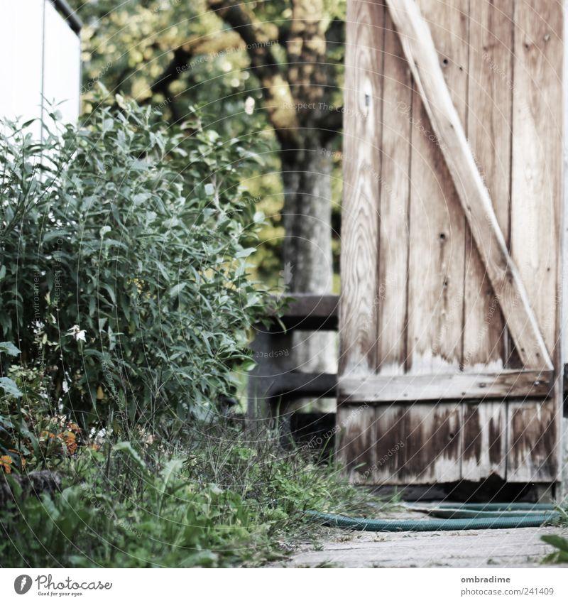mediterran Natur schön Sommer Umwelt Garten Tür Klima frisch Fröhlichkeit Schönes Wetter