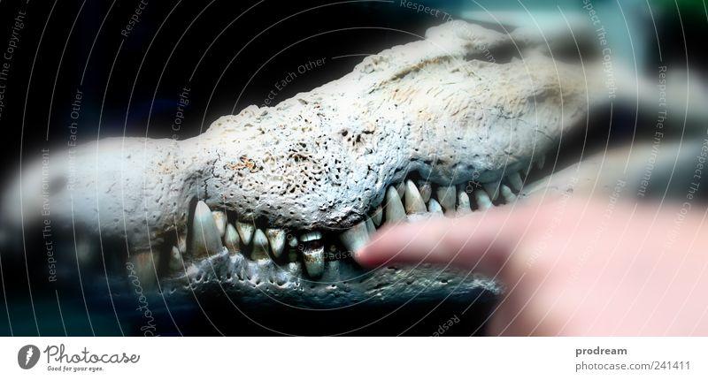 Zahnfee Umwelt Natur Tier Urelemente Klimawandel Krokodil alt beobachten berühren Denken entdecken fangen Fressen füttern Jagd Reinigen träumen ästhetisch