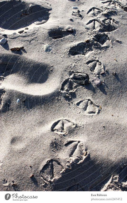 Spuren im Sand Ferien & Urlaub & Reisen Sommer Strand Meer Natur Sonnenaufgang Sonnenuntergang Schönes Wetter Ostsee Vogel Möwe Fährte Bewegung gehen laufen