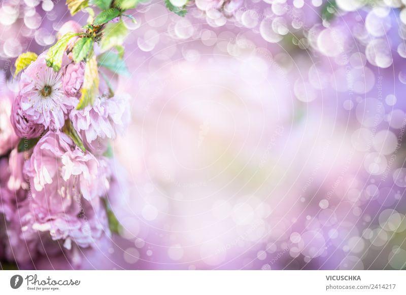 Lila Blüten Hintergrund Ein Lizenzfreies Stock Foto Von Photocase