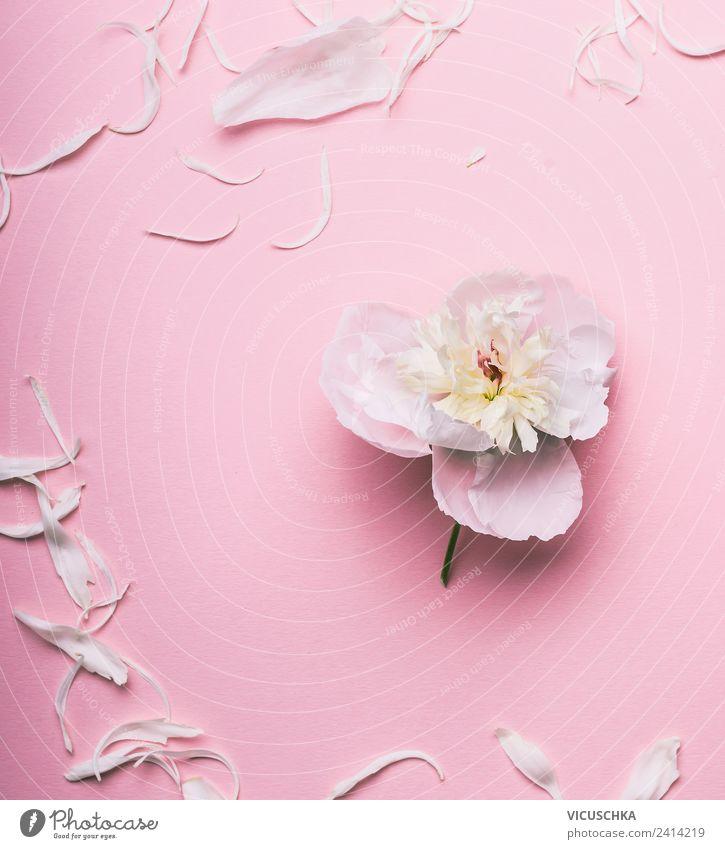 Weiße Blume auf pastell rosa Hintergrund Stil Design Dekoration & Verzierung Feste & Feiern Natur Pflanze Rose Blumenstrauß einfach trendy weich Entwurf