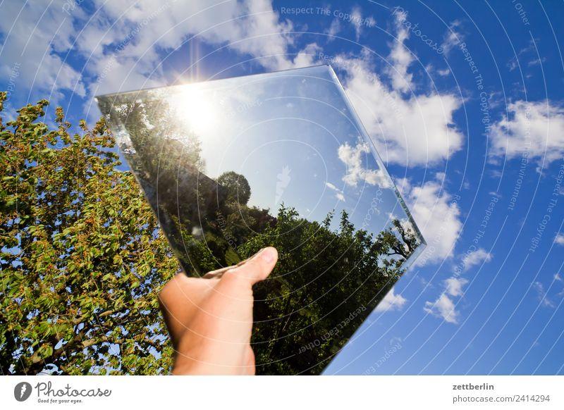 Noch ein Spiegel am Himmel Ast Baum Erholung Garten Himmel (Jenseits) Natur Pflanze Schrebergarten Sommer Textfreiraum Tiefenschärfe Spiegelbild Wolken Sonne