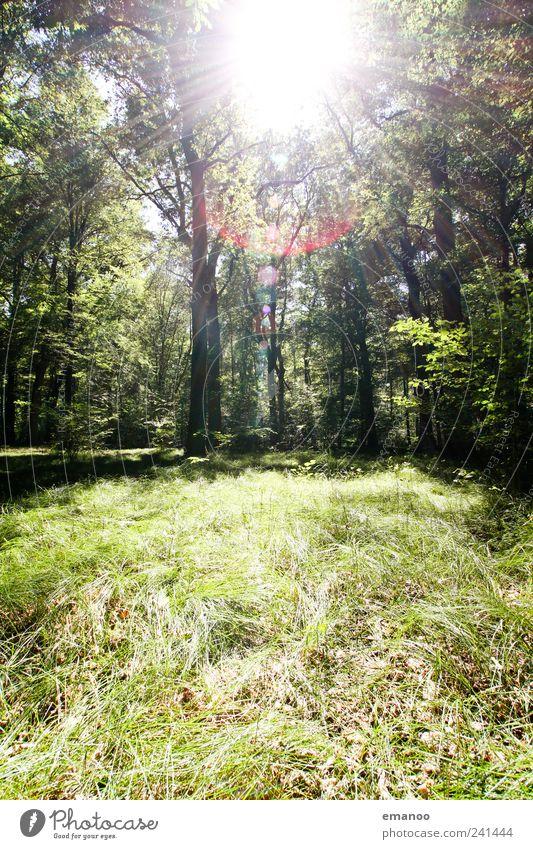 Sonne im Graswald Natur Ferien & Urlaub & Reisen Pflanze grün Sommer Baum Blatt Landschaft Wald Umwelt natürlich Freiheit Wetter Wachstum
