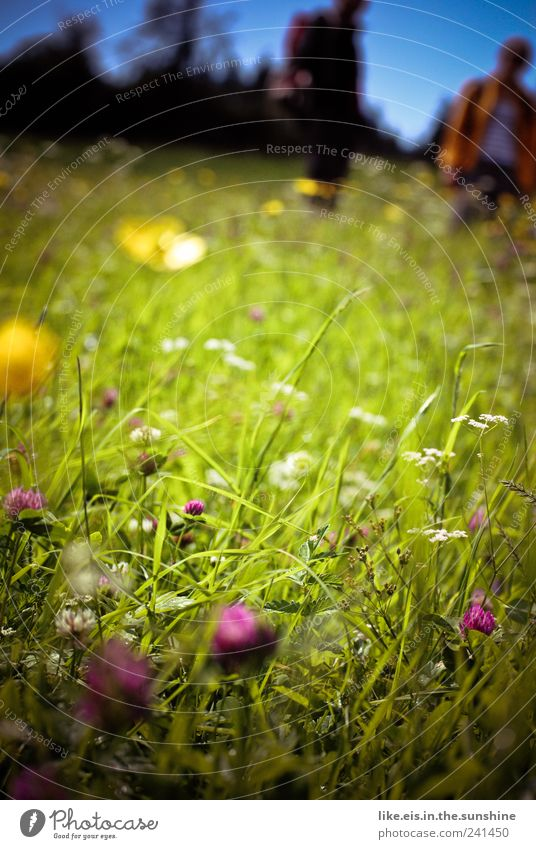 haaaaaaaaaaaaatschiii! Ferien & Urlaub & Reisen Ausflug Sommer Sommerurlaub Umwelt Natur Pflanze Tier Schönes Wetter Gras Sträucher Wiese Alm Bergwiese