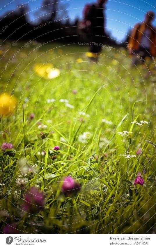 haaaaaaaaaaaaatschiii! Natur Ferien & Urlaub & Reisen Pflanze grün Sommer Erholung Tier Umwelt Wiese Gras Sträucher Ausflug Blühend Schönes Wetter Mohn