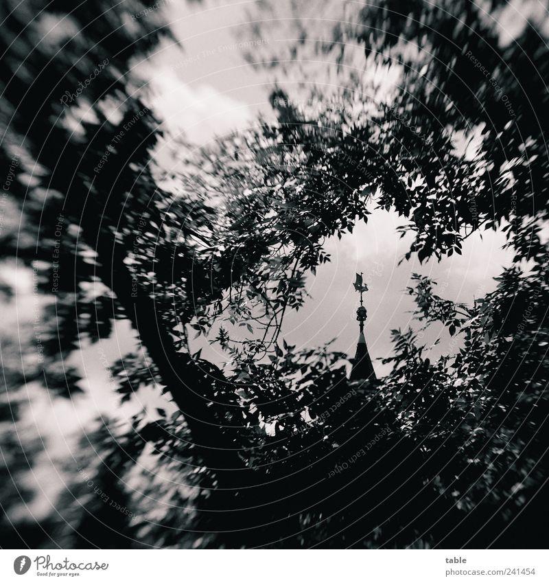 monochrome world Umwelt Himmel Pflanze Baum Ast Zweige u. Äste Blatt Park Berlin Köpenick Altstadt Gebäude Sehenswürdigkeit Rathaus Turmspitze Windfahne Stein