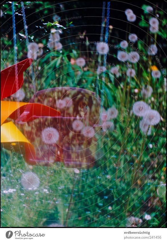 Garten-Wirrwar Natur grün Pflanze rot Sommer Blume Spielen Bewegung Gras Kindheit verrückt Sträucher rund retro Idylle