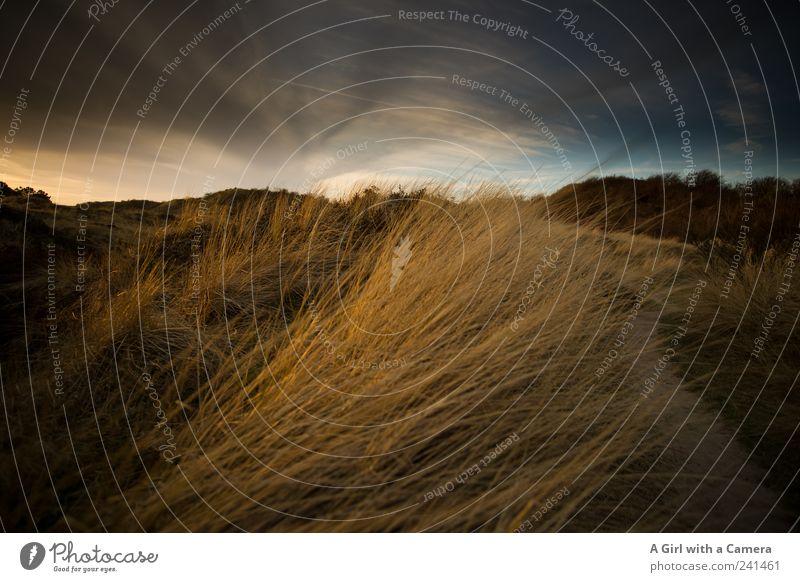 Spiekeroog l evening gold Umwelt Natur Landschaft Pflanze Wolken Sonnenaufgang Sonnenuntergang Sonnenlicht Sommer Wetter Schönes Wetter Gras Küste leuchten