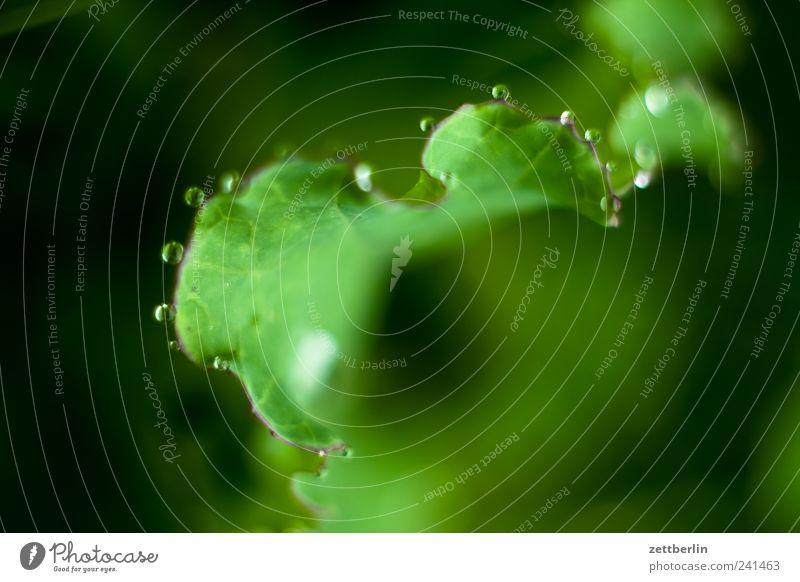 Das bestellte Tautropfenmakro Leben harmonisch Wohlgefühl Zufriedenheit Freizeit & Hobby Garten Natur Sommer Pflanze Blatt Blüte Grünpflanze Wachstum grün