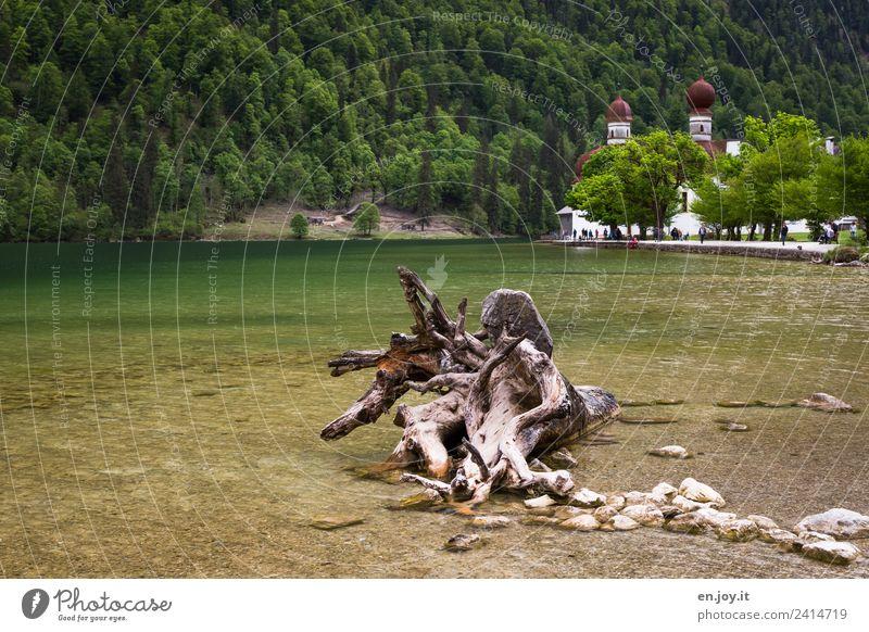 Entwurzelt Ferien & Urlaub & Reisen Tourismus Ausflug Sommerurlaub Berge u. Gebirge Natur Landschaft Wurzel Wald Alpen Seeufer Königssee St. Bartholomä