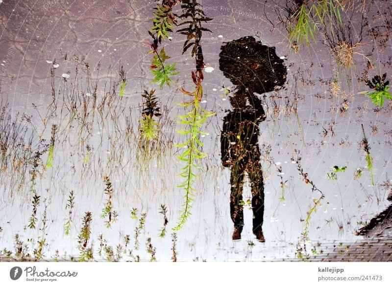 it´s raining men Mensch Natur Mann Wasser Pflanze Erwachsene Umwelt Gras Regen Wetter maskulin Sträucher festhalten Regenschirm Schweben Pfütze
