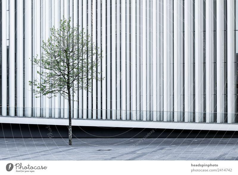 Einzelner Baum (Buche) Vor Moderne Weißer Architektur   Ein Lizenzfreies  Stock Foto Von Photocase