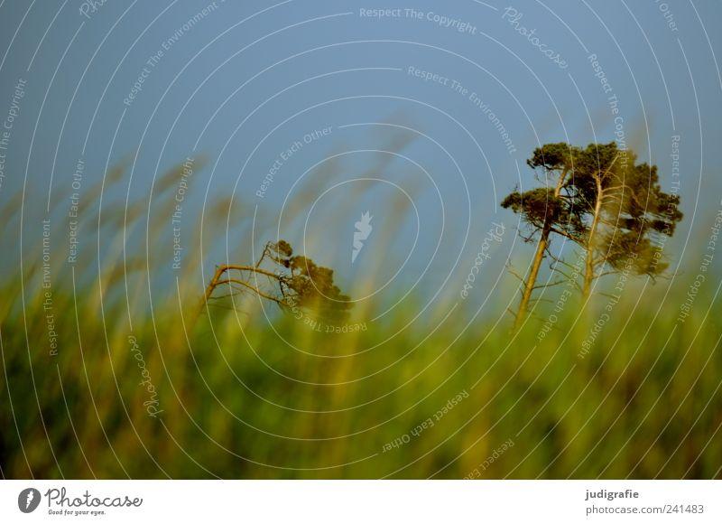 Weststrand Natur schön Himmel Baum grün Pflanze Sommer Gras Landschaft Stimmung Küste Umwelt Wachstum wild natürlich Ostsee