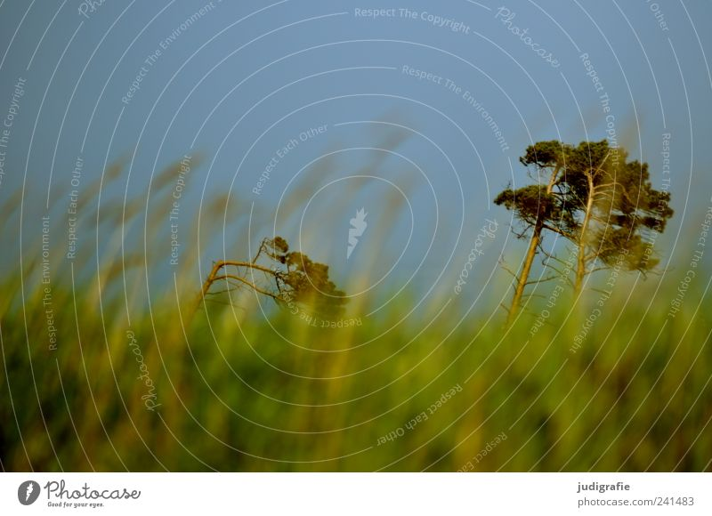 Weststrand Umwelt Natur Landschaft Pflanze Himmel Wolkenloser Himmel Sommer Schönes Wetter Baum Gras Küste Ostsee Darß Wachstum natürlich schön wild grün