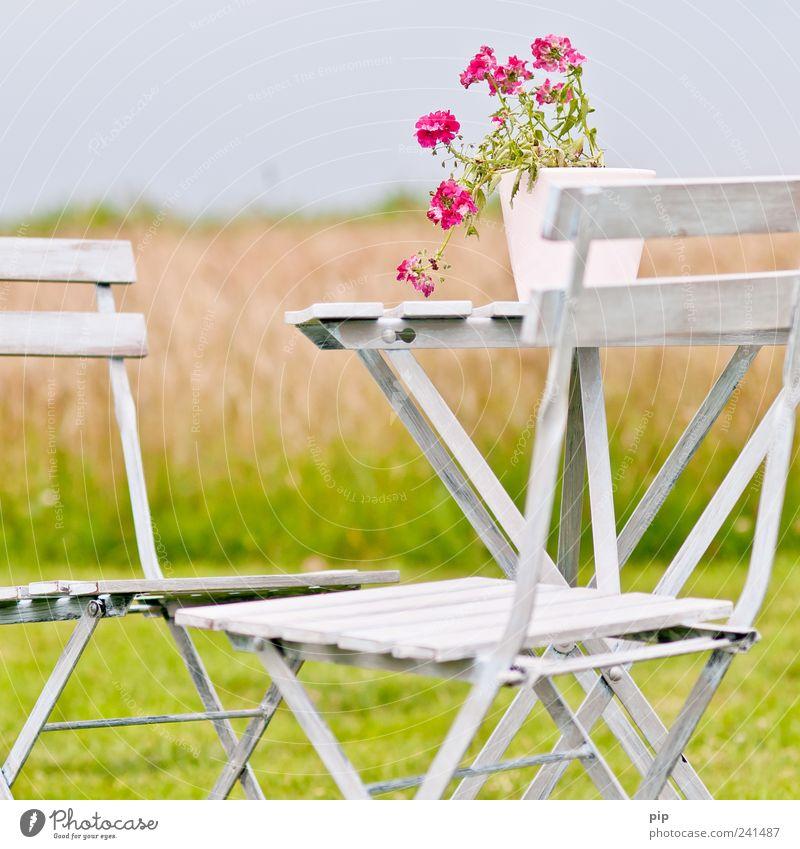 ruhe Natur weiß Blume grün Pflanze Sommer ruhig Erholung Wiese Gras Garten Landschaft Feld rosa Umwelt frei