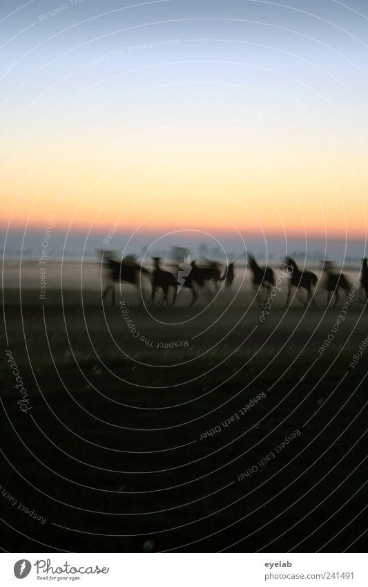 Mädchentraum Reitsport Natur Landschaft Erde Himmel Wolkenloser Himmel Nachthimmel Horizont Klima Wetter Schönes Wetter Nebel Wiese Feld Tier Haustier Nutztier
