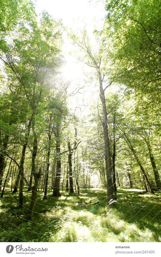 Lichtung Freizeit & Hobby Ferien & Urlaub & Reisen Freiheit Expedition wandern Umwelt Natur Landschaft Pflanze Erde Himmel Sonnenlicht Schönes Wetter Baum Gras