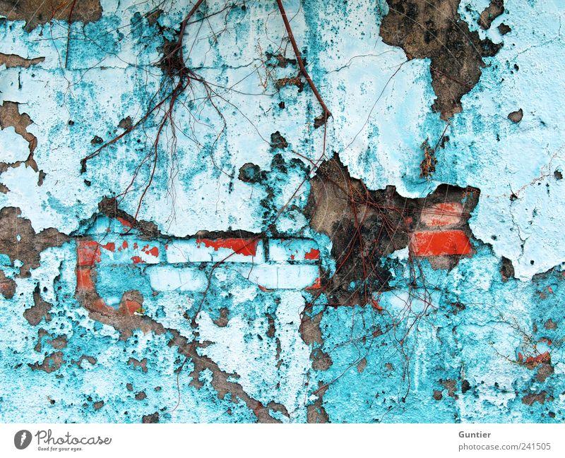 @.marqs komm streichen,... alt blau Pflanze schwarz Haus Wand grau Stein Mauer braun rosa Fassade kaputt Loch Renovieren hässlich