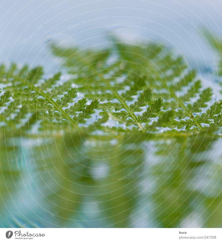 swimming Natur blau Wasser grün schön Pflanze Sommer Blatt Leben Linie Wellen Schwimmen & Baden nass frisch ästhetisch Wachstum