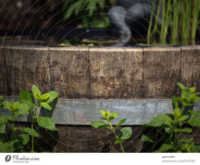 am teichfass Natur Wasser Pflanze Sommer Blatt ruhig Erholung Wiese Garten träumen Park Fuß Zufriedenheit Schwimmen & Baden Dekoration & Verzierung Lächeln