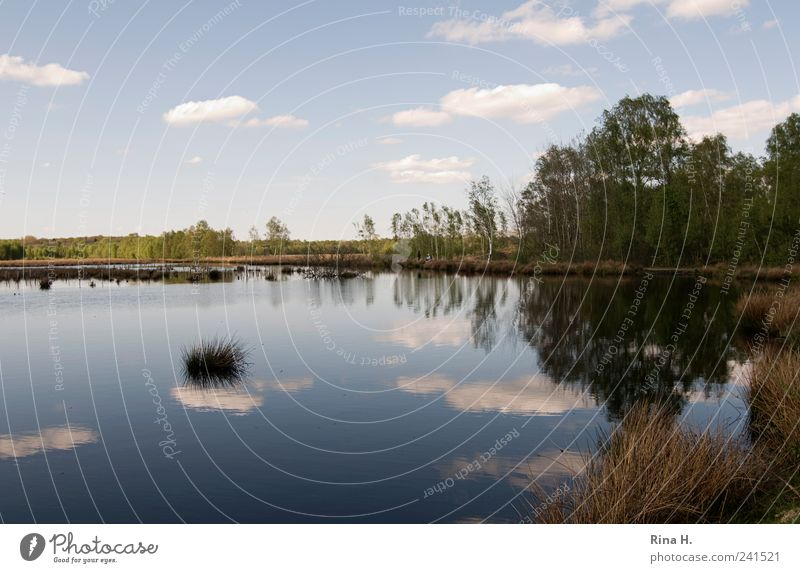 Himmlische Spiegelungen Natur Landschaft Wasser Himmel Horizont Sonnenlicht Frühling Schönes Wetter Baum Gras Sträucher Moor Sumpf Teich See leuchten natürlich