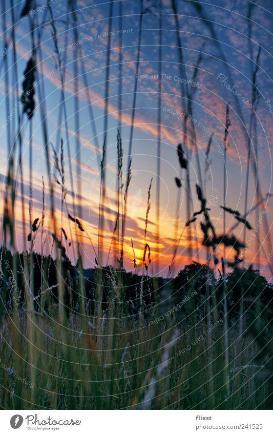 sleeping flowers Natur Landschaft Wolken Sonnenaufgang Sonnenuntergang Sommer Schönes Wetter Gras Sträucher Glück Frühlingsgefühle Leben Farbfoto Außenaufnahme
