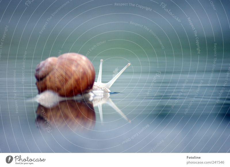 Für sylvi.bechle zum 200sten Jubiläum! Natur Wasser Tier hell Umwelt nass nah natürlich Urelemente Schnecke Pfütze Fühler krabbeln Weinbergschnecken