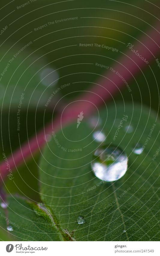 natürlich schön Umwelt Natur Pflanze Regen Blatt ästhetisch außergewöhnlich glänzend klein perfekt rund Tropfen Regentropfen Wasser Stengel grün frisch Muster