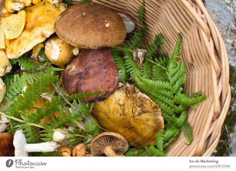 Pilze im Korb Lebensmittel Ernährung Slowfood Natur Pflanze Erde Herbst Farn Nutzpflanze Wildpflanze Wald nachhaltig natürlich wild braun gelb grün Schwammerl