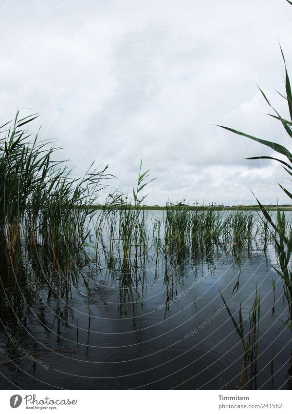Alles gut! Himmel Natur Wasser blau Pflanze Ferien & Urlaub & Reisen Wolken dunkel Umwelt Landschaft Gefühle grau See groß ästhetisch bedrohlich