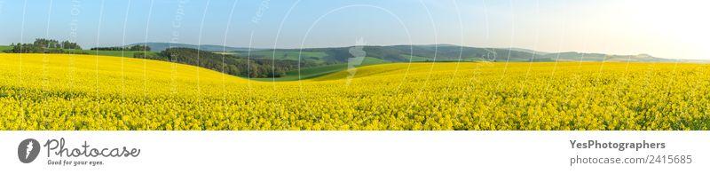 Vergewaltigungsfelder bei Sonnenaufgang in Mähren Sommer Industrie Umwelt Natur Landschaft Pflanze Horizont Hügel gelb grün Energie Ferien & Urlaub & Reisen