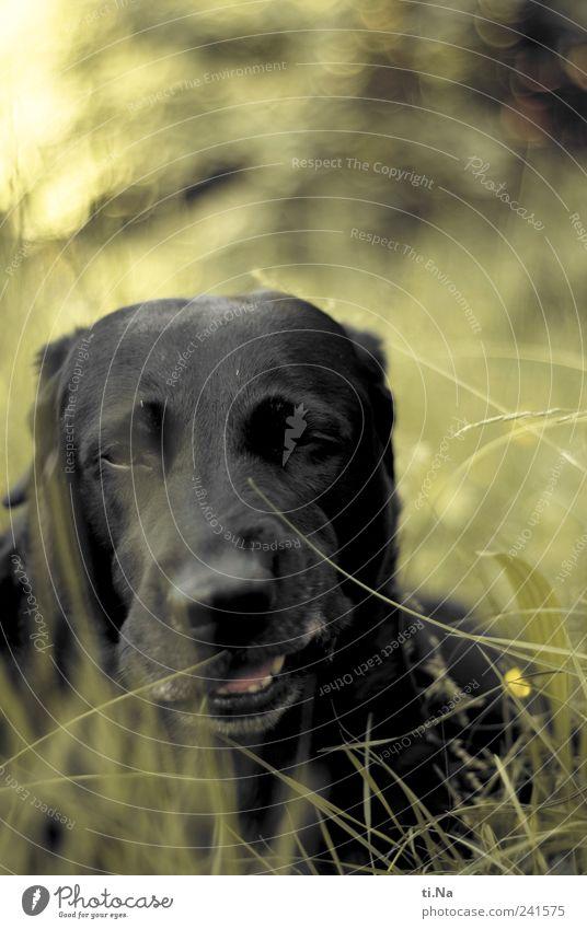 Yeahh Hund Natur grün Pflanze Sommer Tier schwarz Umwelt Landschaft Wiese Gras Garten lustig warten liegen Fröhlichkeit