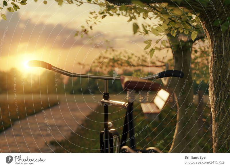 Fahrrad in der Abendsonne Ferien & Urlaub & Reisen Ausflug Sommer Sonne Sport Fahrradfahren Natur Landschaft Sonnenaufgang Sonnenuntergang Sonnenlicht Baum