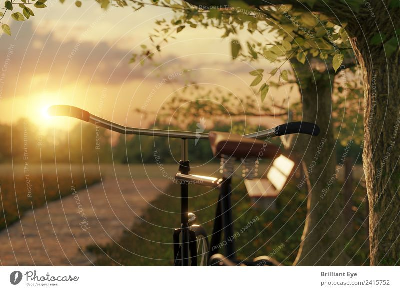 Fahrrad in der Abendsonne Natur Ferien & Urlaub & Reisen Sommer Sonne Landschaft Baum Erholung ruhig Wärme Sport Bewegung Garten Ausflug Freizeit & Hobby