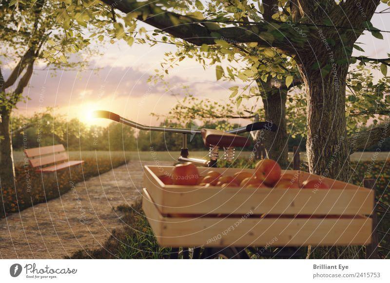 Rast einlegen Apfel Ernährung Bioprodukte Vegetarische Ernährung Lifestyle Freizeit & Hobby Ausflug Sommer Sport Fahrrad Natur Sonne Sonnenaufgang