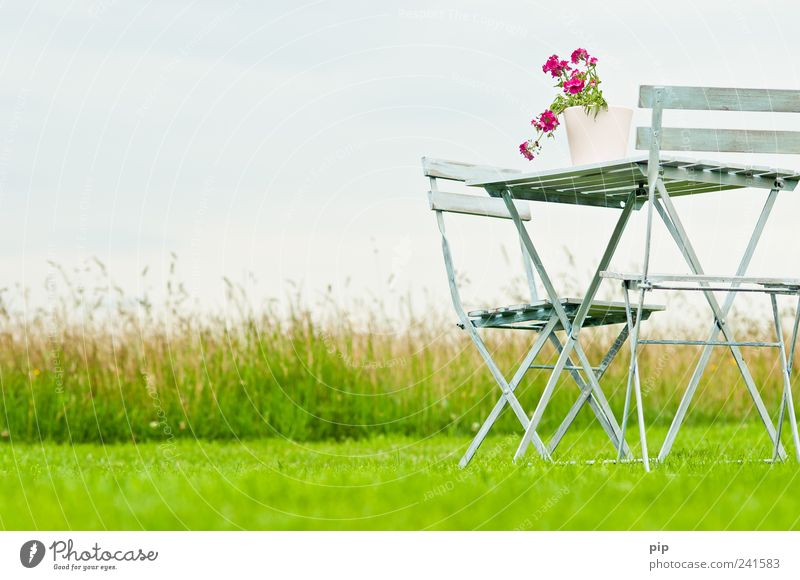 iDülle Natur Blume grün Pflanze Sommer ruhig Einsamkeit Erholung Wiese Gras Garten Landschaft Feld rosa Umwelt frei