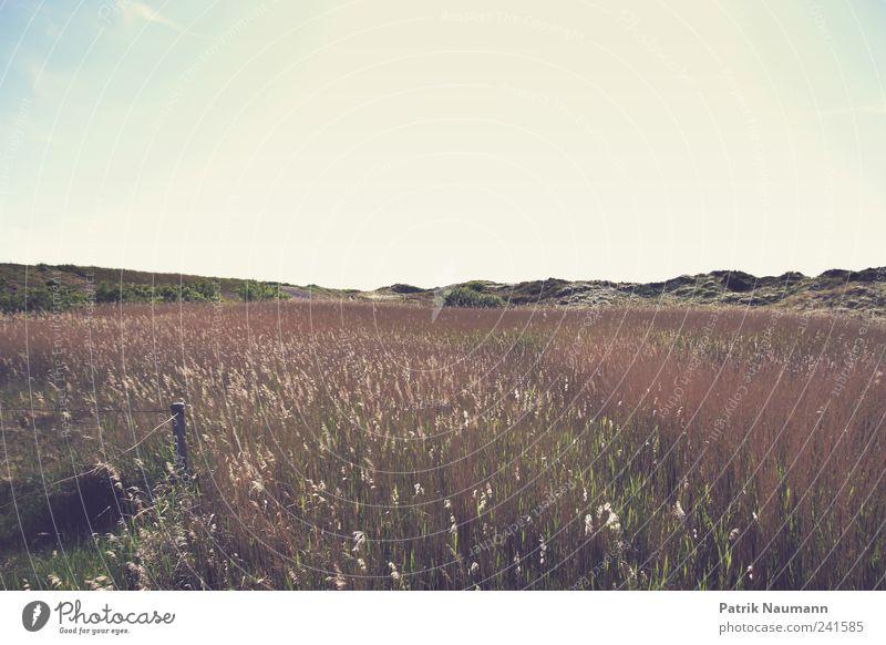Landschaftsromantik Natur schön Himmel grün blau Sommer Strand Wolken Ferne Erholung Gras Landschaft braun gold frei Sträucher